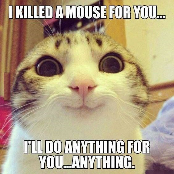 Cat - I KILLED A MOUSE FOR YOU. ILL DO ANYTHING FOR YOU.ANYTHING.