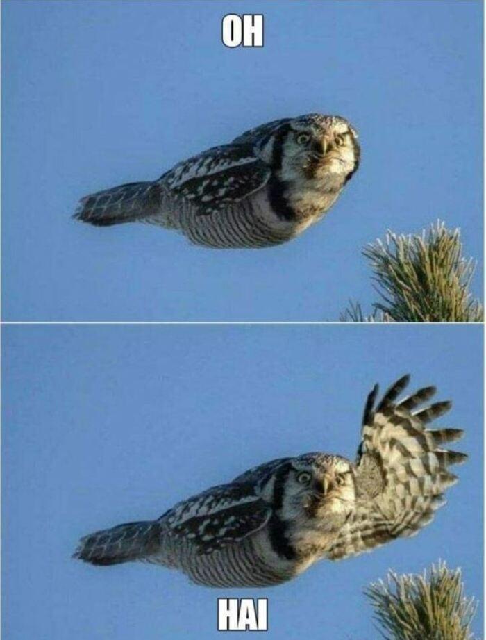 Bird - OH HAI