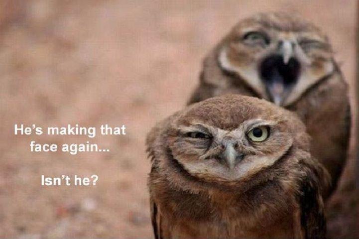 Bird - He's making that face again... Isn't he?