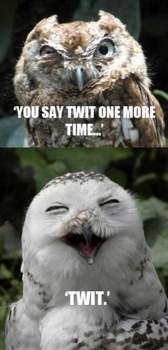 Bird - YOU SAY TWIT ONE MORE TIME. TWIT.