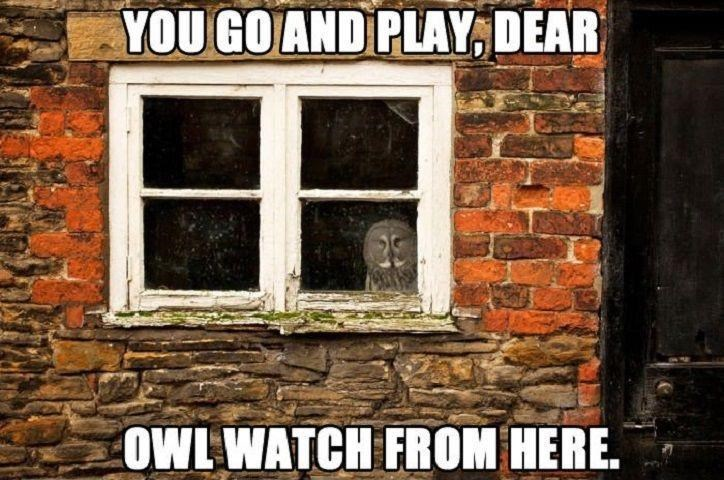 Window - YOU GO AND PLAY, DEAR OWL WATCH FROM HERE.