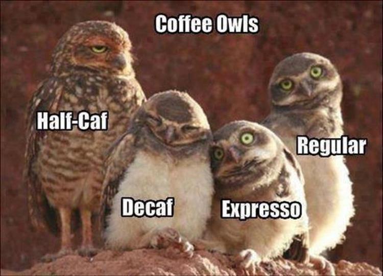 Brown - Coffee Owls Half-Caf Regular Decaf Expresso