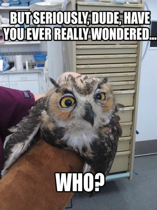 Bird - BUT SERIOUSLY, DUDE, HAVE YOU EVER REALLY WONDERED. WHO?