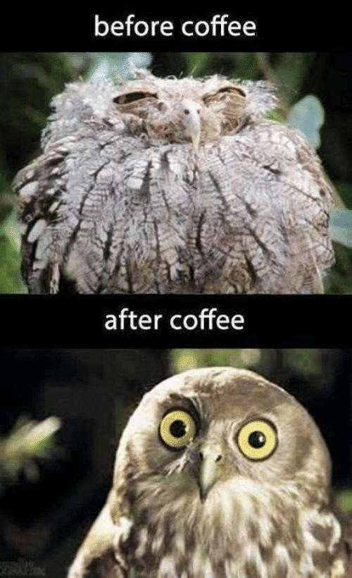 Head - before coffee after coffee