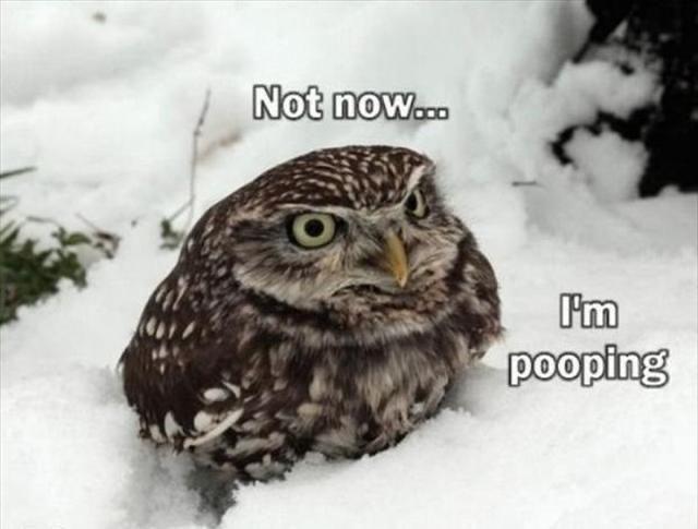 Bird - Not now... I'm pooping