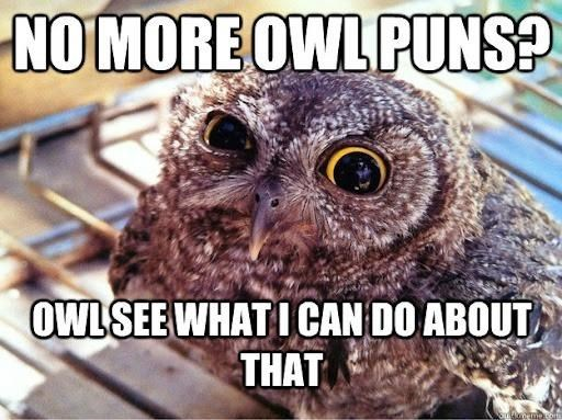 Bird - NO MORE OWL PUNS? OWL SEE WHAT I CAN DO ABOUT THAT