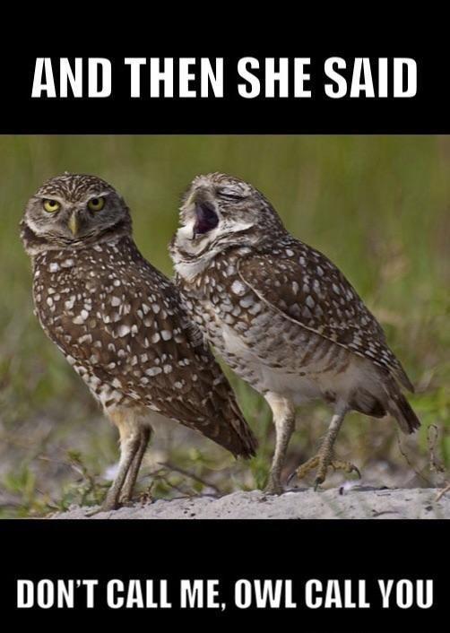 Bird - AND THEN SHE SAID DON'T CALL ME, OWL CALL YOU