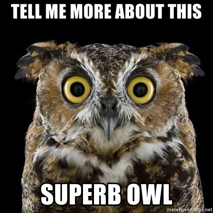 Head - TELL ME MORE ABOUT THIS SUPERB OWL memegenerator.net