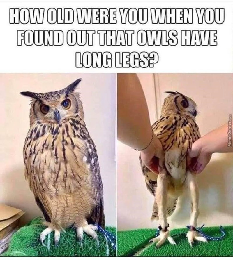 Bird - HOW OLD WERE YOU WHEN YOU FOUND OUT THAT OWLS HAVE LONG LEGS? Memecentercam