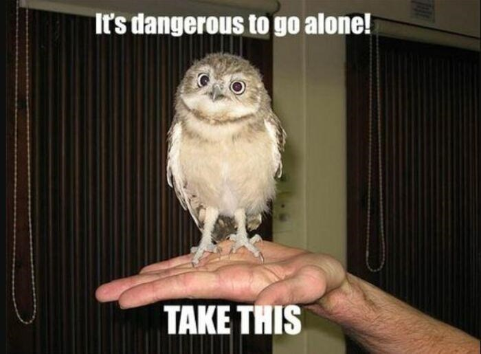 Bird - It's dangerous to go alone! TAKE THIS