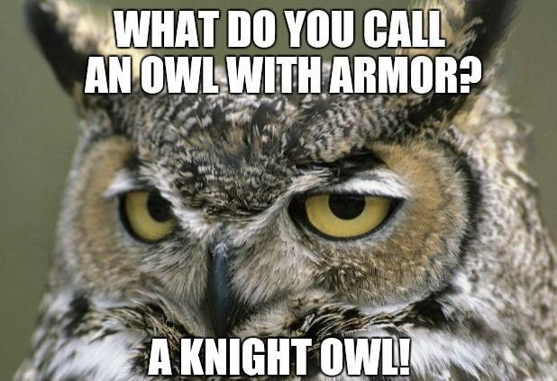 Bird - WHAT DO YOU CALL AN OWL WITH ARMOR? A KNIGHT OWL!
