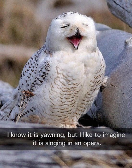 Bird - I know it is yawning, but I like to imagine it is singing in an opera.