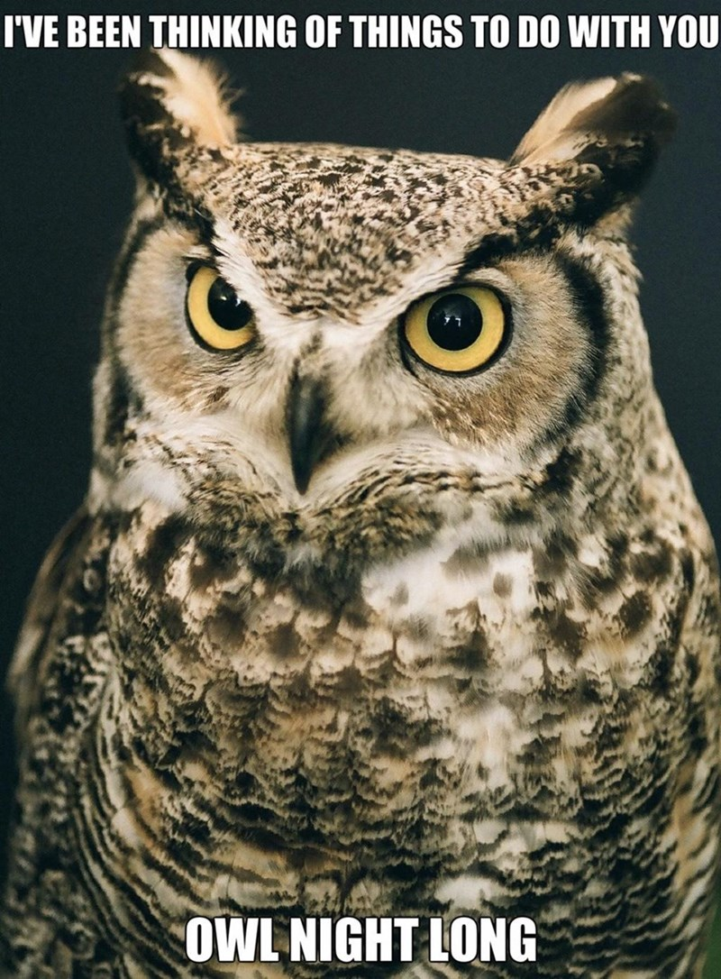 Bird - I'VE BEEN THINKING OF THINGS TO DO WITH YOU OWL NIGHT LONG