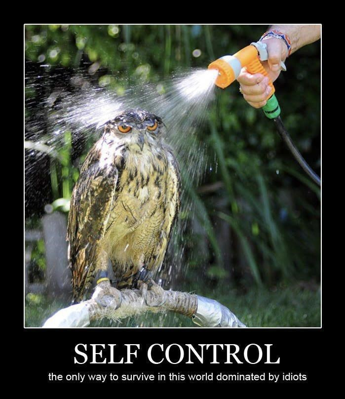 Bird - SELF CONTROL the only way to survive in this world dominated by idiots