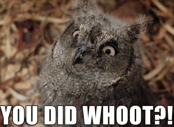 Bird - YOU DID WHOOT?!
