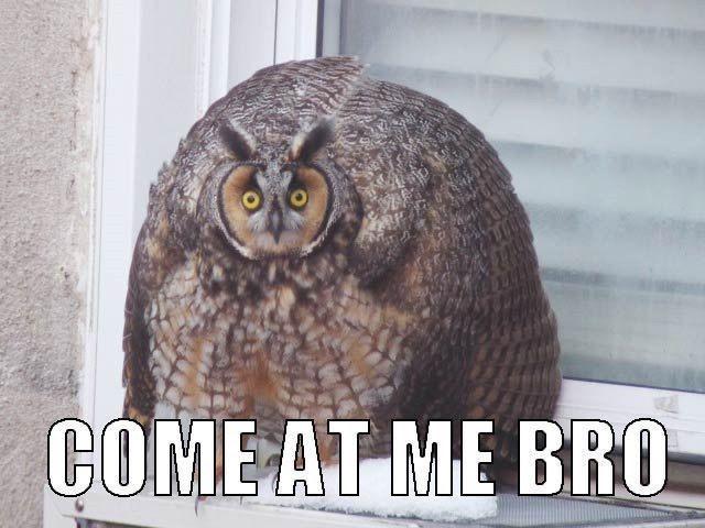 Bird - COME AT ME BRO