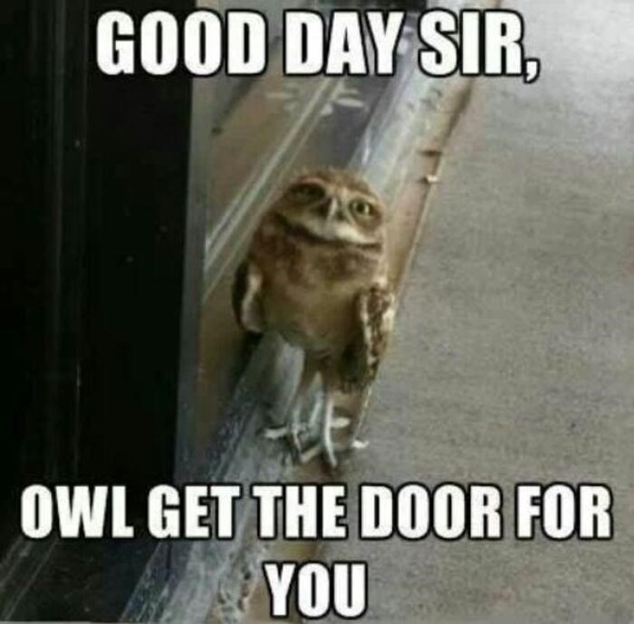 Organism - GOOD DAY SIR. OWL GET THE DO0OR FOR YOU