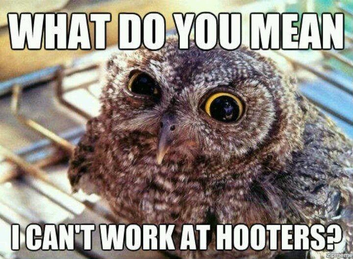 Bird - WHAT DO YOU MEAN ICAN'T WORK AT HOOTERS? z pteme