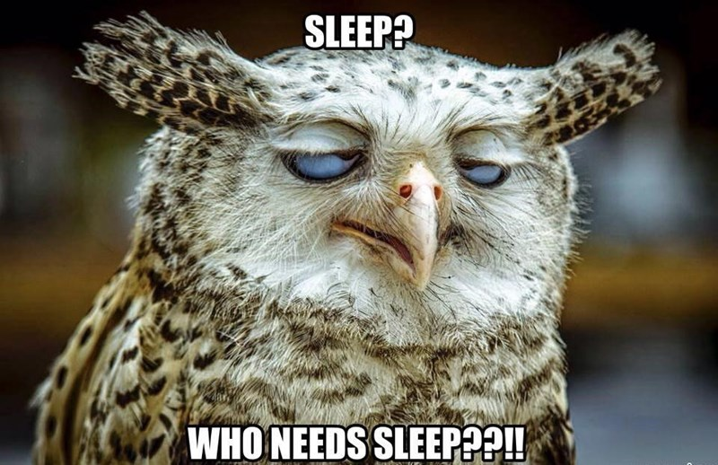 Bird - SLEEP? WHO NEEDS SLEEP?!