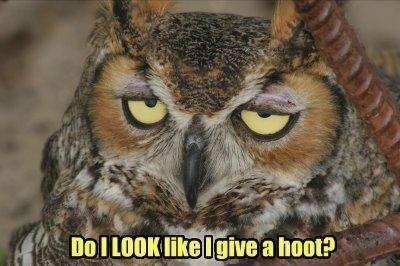 Bird - Do I LOOK like Igive a hoot?