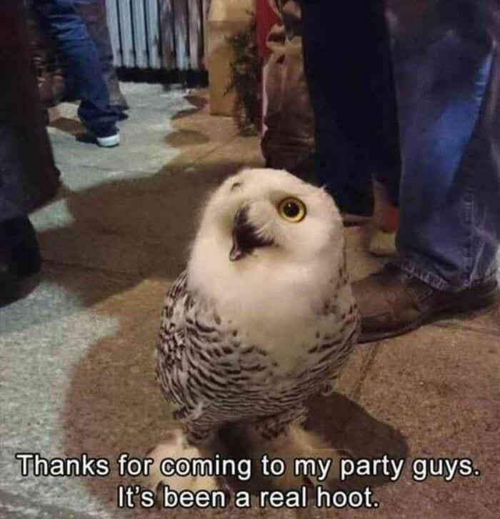 Clothing - Thanks for coming to my party guys. It's been a real hoot.