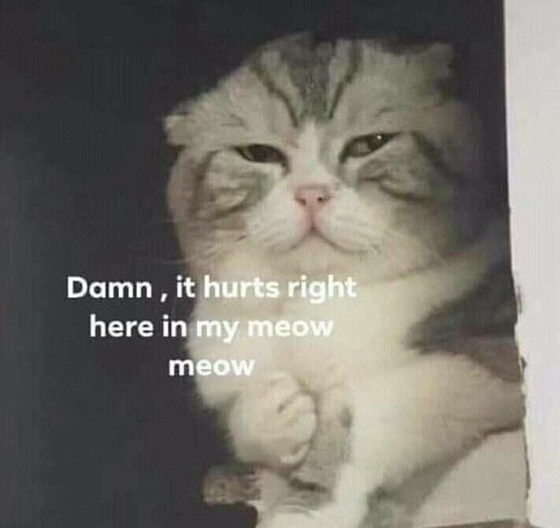 Eye - Damn , it hurts right here in my meow meow