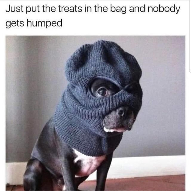 Photograph - Just put the treats in the bag and nobody gets humped