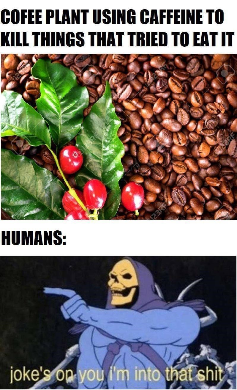 Plant - COFEE PLANT USING CAFFEINE TO KILL THINGS THAT TRIED TO EAT IT HUMANS: joke's op you i'm into that shit 23RF