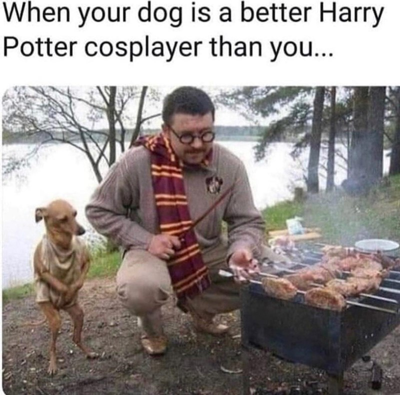 Food - When your dog is a better Harry Potter cosplayer than you...