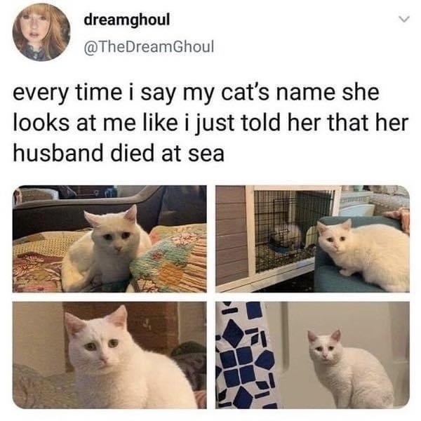 Cat - dreamghoul @TheDreamGhoul every time i say my cat's name she looks at me like i just told her that her husband died at sea