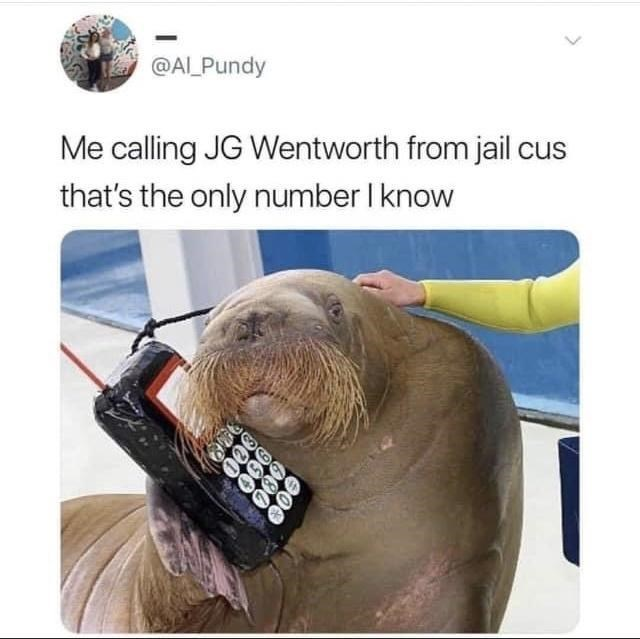 Organism - @AL_Pundy Me calling JG Wentworth from jail cus that's the only number I know 900 O00 960 900