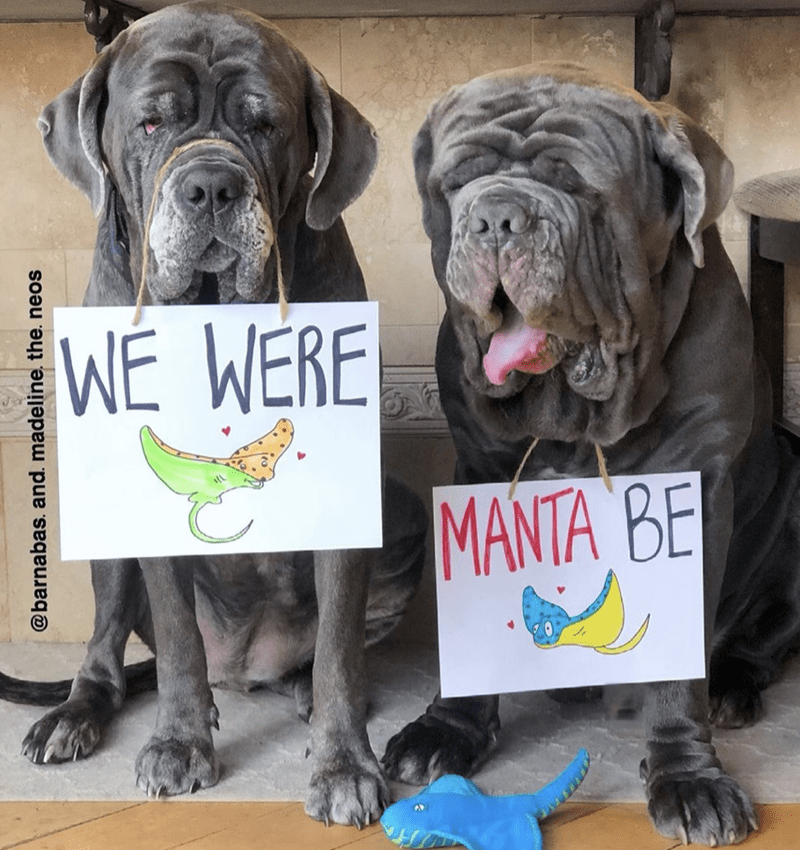 Dog - WÉ WERE MANTA BE @barnabas. and. madeline, the. neos