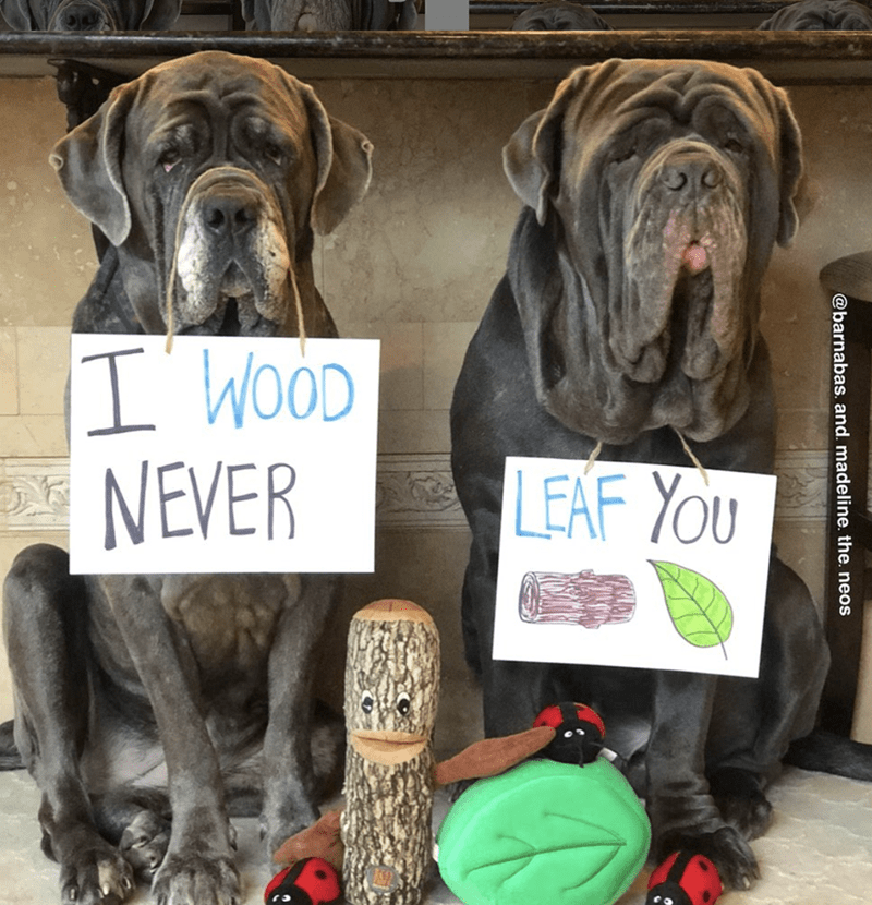 Dog - I' WOOD NEVER LEAF YOU @barnabas. and. madeline. the. neos