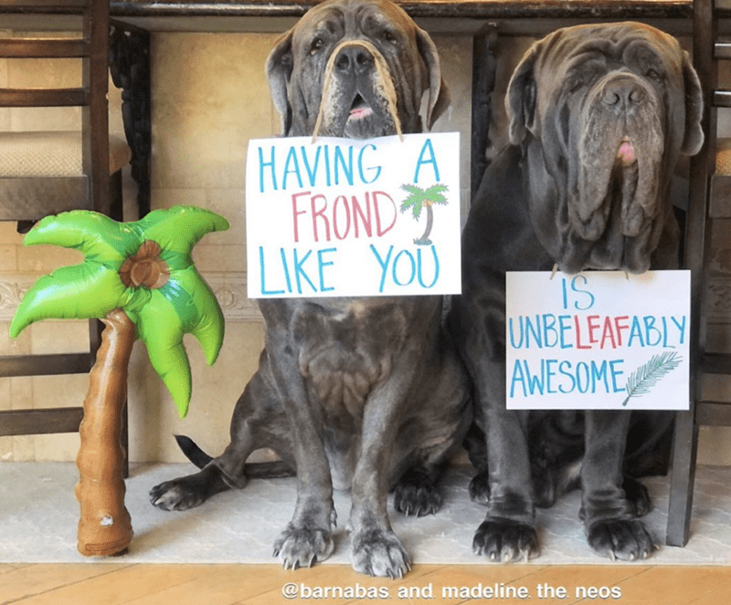 Dog - HAVING A FROND LIKE YOU IS UNBELEAFABLY AWESOME @barnabas. and. madeline. the. neos