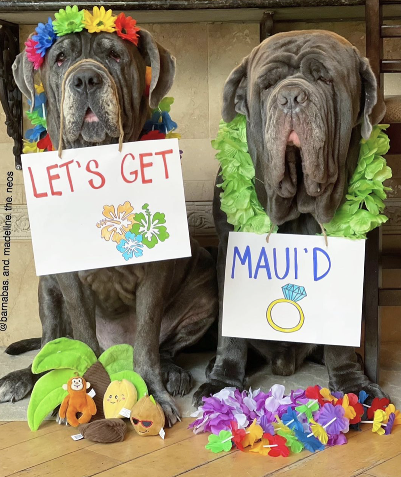 Green - LET'S GET MAUI'D @barnabas. and. madeline. the. neos