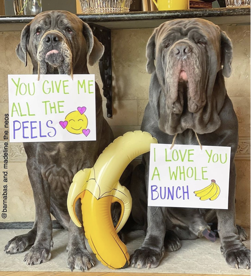 Dog - YOu'GIVE ME ALL THE PEELS | LOVE 'YOU A WHOLE BUNCH @barnabas. and. madeline. the. neos