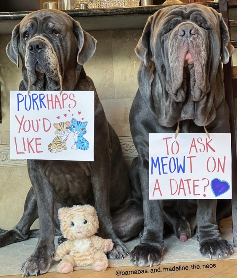 Dog - PÚRRHAPS YOU'D LIKE S TO ASK MEOWT ON A DATE? @barnabas. and. madeline. the. neos