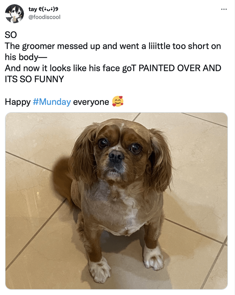 Dog - tay e(iuí)9 @foodiscool SO The groomer messed up and went a liiittle too short on his body- And now it looks like his face goT PAINTED OVER AND ITS SO FUNNY Happy #Munday everyone