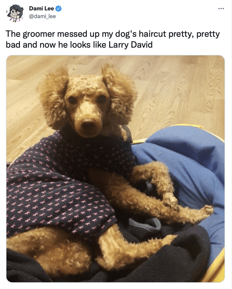 Dog - Dami Lee @dami_lee The groomer messed up my dog's haircut pretty, pretty bad and now he looks like Larry David