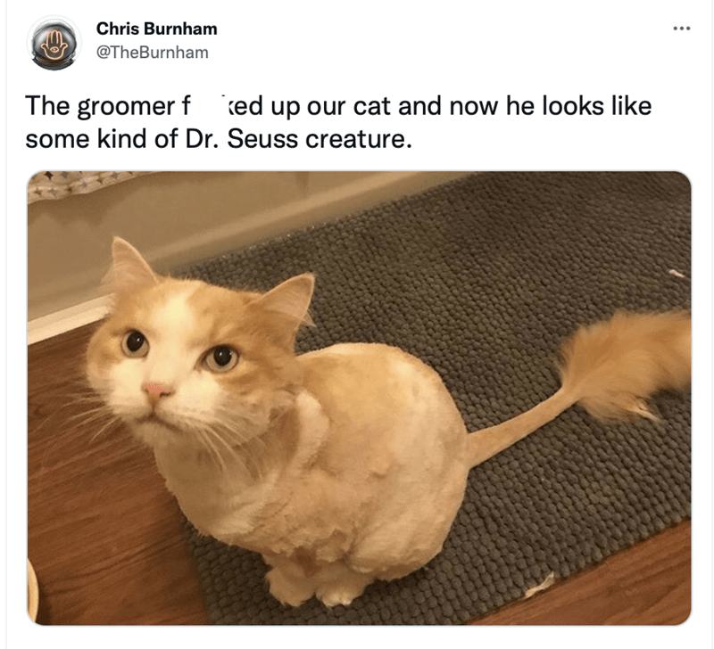 Cat - Chris Burnham ... @TheBurnham The groomer f ed up our cat and now he looks like some kind of Dr. Seuss creature.
