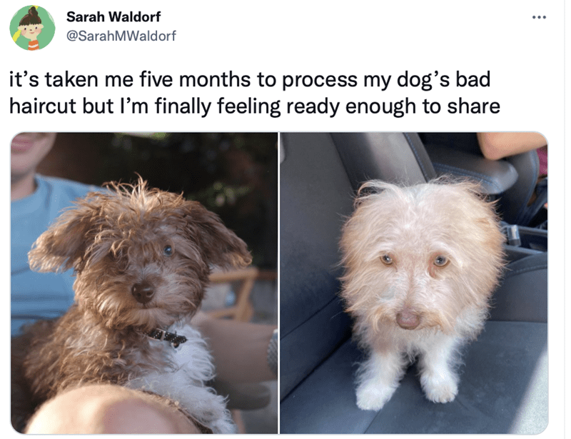 Dog - Sarah Waldorf @SarahMWaldorf it's taken me five months to process my dog's bad haircut but l'm finally feeling ready enough to share