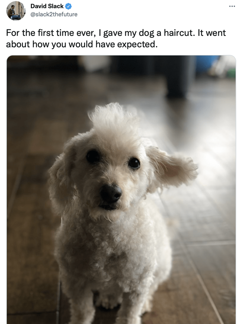 Dog - David Slack @slack2thefuture For the first time ever, I gave my dog a haircut. It went about how you would have expected.