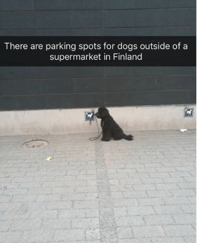 Asphalt - There are parking spots for dogs outside of a supermarket in Finland