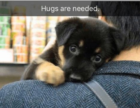 Dog - Hugs are needed.