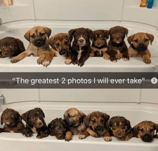 """Dog - """"The greatest 2 photos I will ever take"""""""