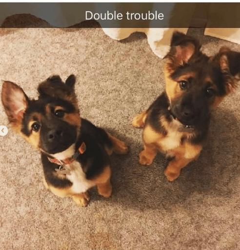 Dog - Double trouble