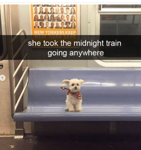 Dog - NEW YORKERS KEEP she took the midnight train going anywhere