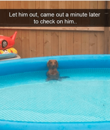 Water - Let him out, came out a minute later to check on him..