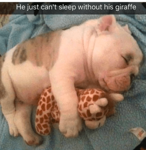 Photograph - He just can't sleep without his giraffe