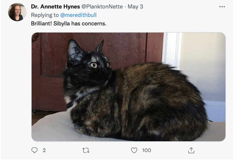 Cat - Dr. Annette Hynes @PlanktonNette · May 3 Replying to @meredithbull Brilliant! Sibylla has concerns. 100